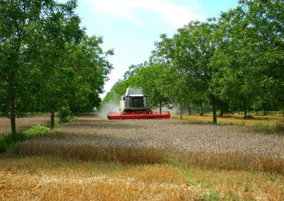 Introduction de l'agroforesterie moderne en Wallonie